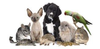 Stor grupp av olika djur royaltyfria foton