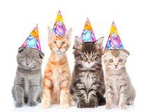 Stor grupp av små katter med födelsedaghattar Isolerat på vit royaltyfri bild