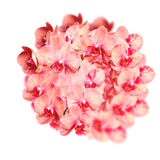 Stor härlig grupp av eleganta orkidéblommor Royaltyfri Bild