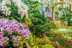 Stor härlig inomhus trädgård royaltyfria foton