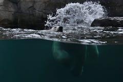 Stor härlig isbjörn som simmar i det iskalla vattnet Arkivbild