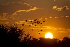 Stor härlig soluppgång med fåglar som flyger in mot solen Arkivfoto