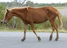 stor häst Royaltyfri Fotografi
