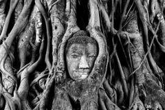Stor head Buddha Arkivbild