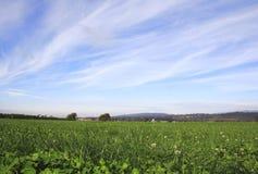 Stor himmel och grässlätt Royaltyfria Foton