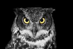 Stor Horned uggla i BW Royaltyfria Bilder