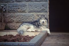 stor hund Royaltyfri Fotografi