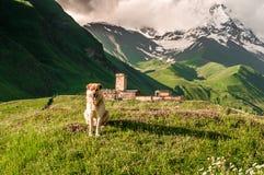 Stor hund i bergen Royaltyfri Foto