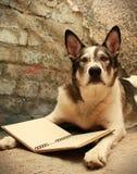 Stor hund med att läsa för exponeringsglas Arkivbild