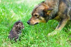 Stor hund och liten kattunge fotografering för bildbyråer