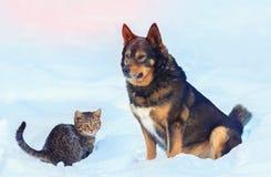 Stor hund och litet kattungesammanträde i snön royaltyfria bilder