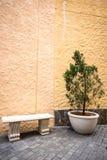 Stor inlagd växt och bänkstående arkivbilder