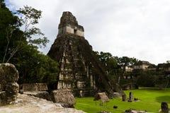 Stor Jaguar tempel, Tikal, Guatemala Arkivfoto