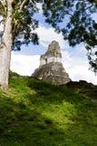 Stor Jaguar tempel, Tikal, Guatemala Royaltyfria Bilder
