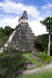 Stor Jaguar tempel, Tikal, Guatemala Royaltyfri Fotografi