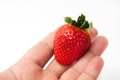 Stor jordgubbe i handen Royaltyfri Fotografi