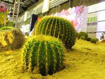 stor kaktus Royaltyfria Foton