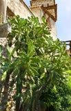 Stor kaktus i den medeltida Eze byn på den franska Riviera kusten Provence, Frankrike fotografering för bildbyråer