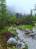 Stor kall dalsommarsikt (höga Tatras, Slovakien) Royaltyfri Foto
