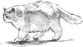 Stor katt Arkivfoton