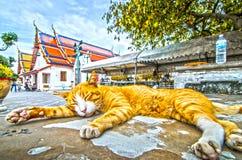 stor katt Royaltyfria Foton