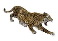 stor kattjaguar Arkivbilder