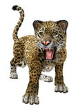 stor kattjaguar Arkivbild