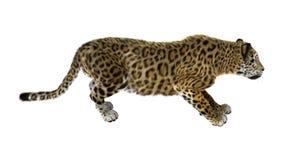 stor kattjaguar Royaltyfria Bilder