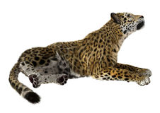 stor kattjaguar Royaltyfri Bild
