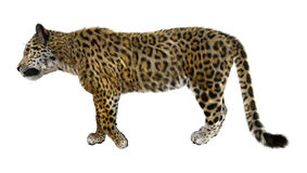 stor kattjaguar Royaltyfria Foton
