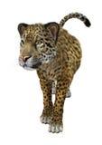 stor kattjaguar Royaltyfri Foto