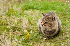 stor katttabby Arkivbild
