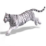 stor katttigerwhite Arkivbild