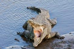 stor krokodil Arkivbild