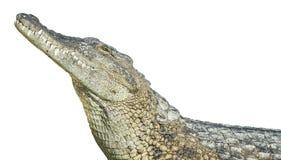 stor krokodil Fotografering för Bildbyråer