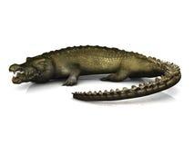 stor krokodil Royaltyfria Foton