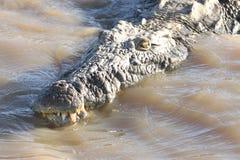 Stor krokodil i sjön av St Lucia i Sydafrika Royaltyfri Foto