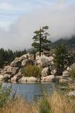 stor lake för björn Arkivfoto