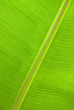 Stor Leaf Royaltyfri Fotografi