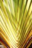 stor leaf Arkivfoton