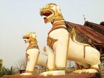 Stor lejonstuckatur Arkivbild