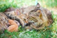 stor liten kattfamiljkattunge Arkivfoto