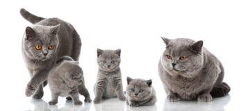 stor liten kattfamiljkattunge Arkivbild