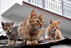 stor liten kattfamiljkattunge Royaltyfri Fotografi