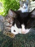 stor liten kattfamiljkattunge Arkivbilder