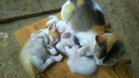 stor liten kattfamiljkattunge Royaltyfria Bilder