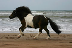 stor liten ponnykörning Royaltyfria Foton
