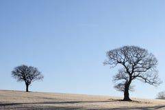 stor liten tree Arkivfoton