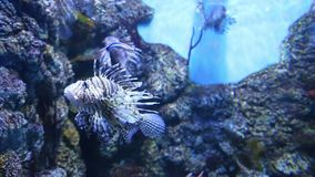 Stor marin- fisk, undervattens- liv arkivfilmer