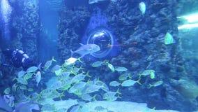 Stor marin- fisk, undervattens- liv lager videofilmer